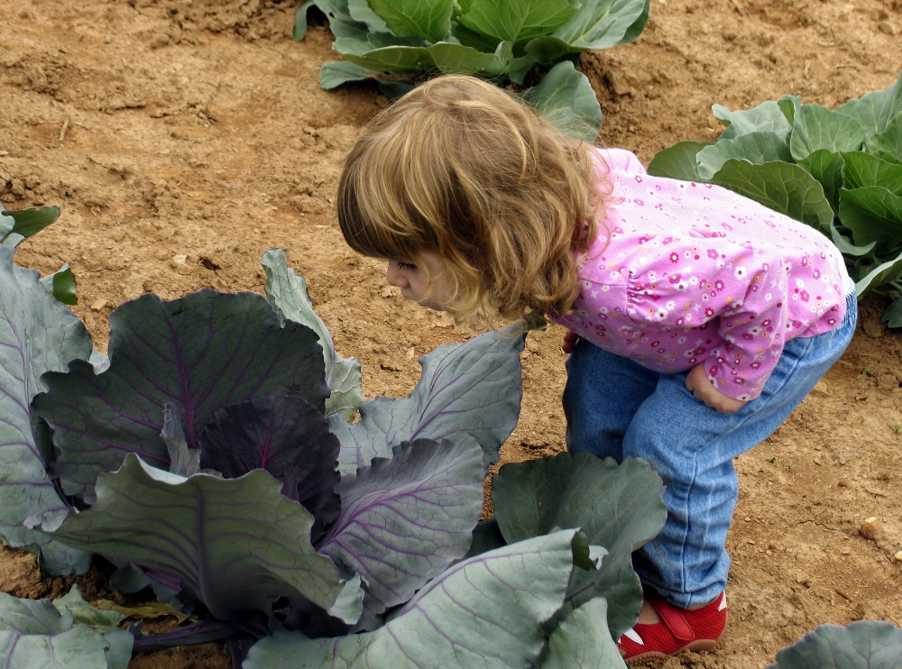 Cabbage Patch Fantasy Land – Griswold, Iowa – Part One