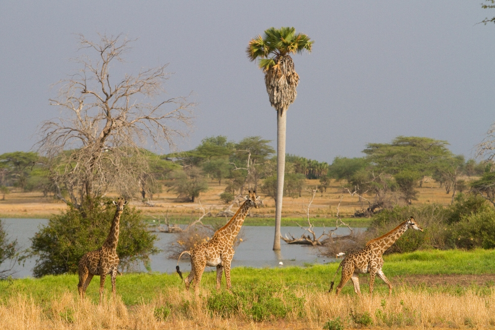 Selous Game Reserve – Tanzania – Africa