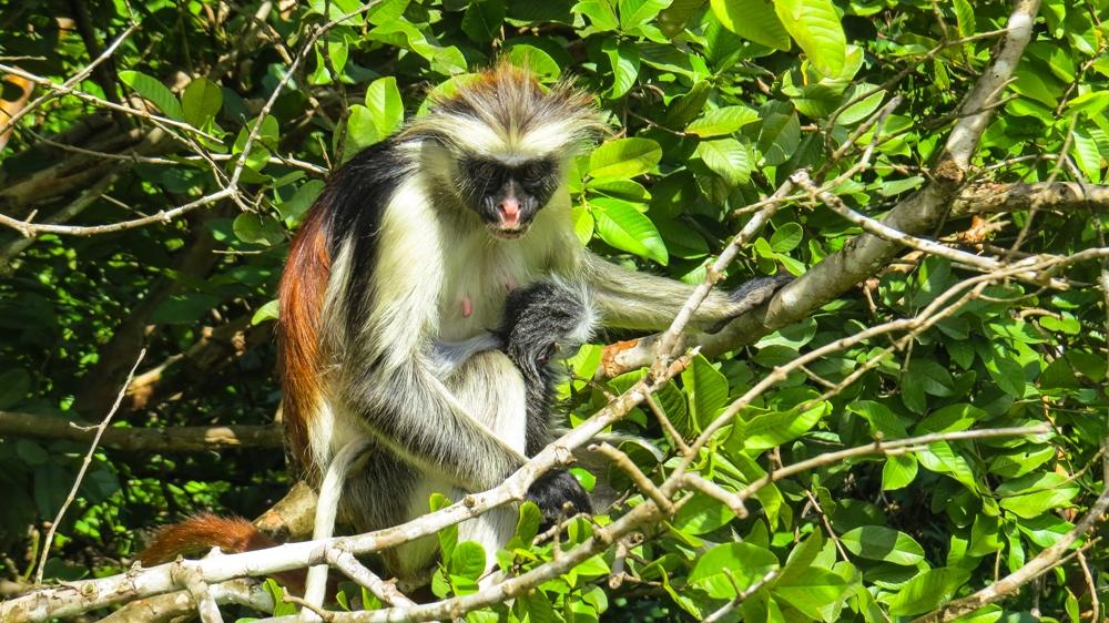 Safari in Tanzania - Kigoma