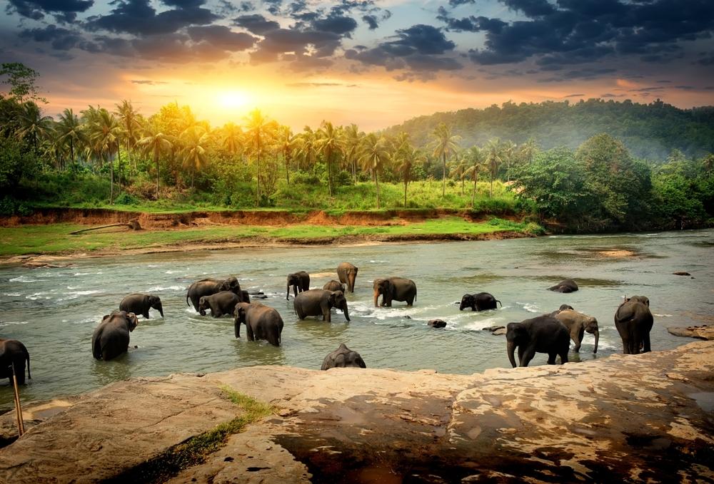 The History of Sri Lanka's World Heritage Sites