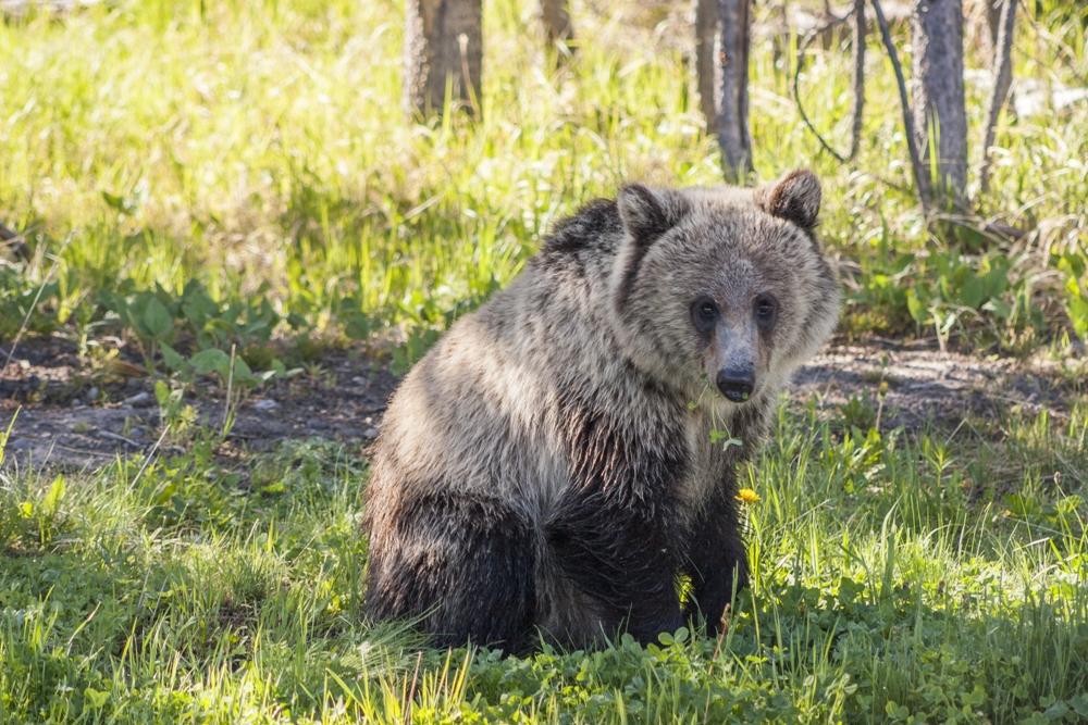 Yellowstone Bear World – Rexburg, Idaho